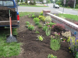 Step 2 - I Expand Boundary of Memorial Garden to Allow for Far Greater Planting of Beautiful Drought and Heat Tolerant Perennials
