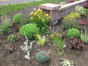 Step 4: I Keep Adding Drought and Heat Tolerant Perennials
